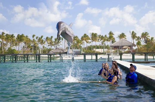 Dolphin Funtastic