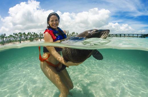 Fur Seals Encounter