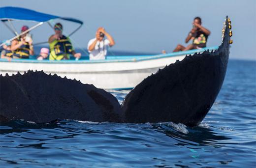 Ballenas en Samaná
