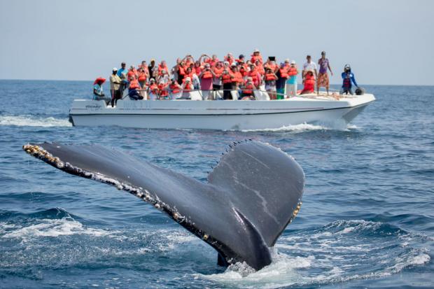 Baleias em Samana