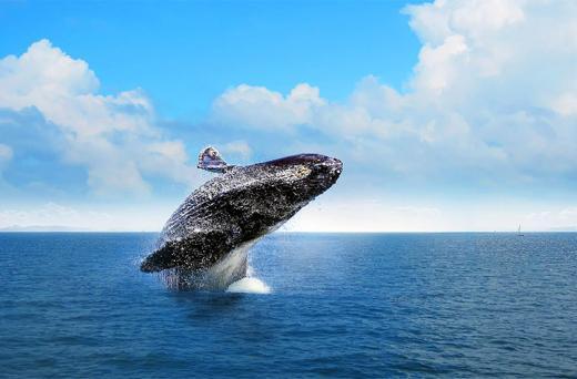 Baleias em Samana de Avião