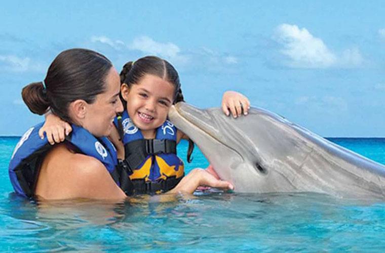 Dolphin Meet N Greet