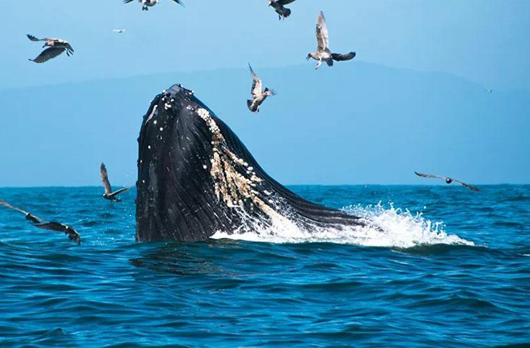 Bacardí Whales