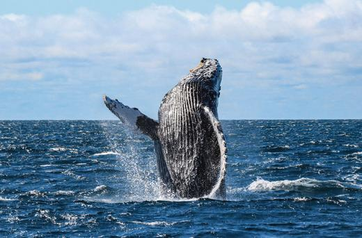 All-Inclusive Whale Watching Cruise