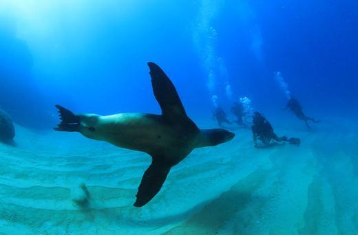 Los Cabos Diving Programs