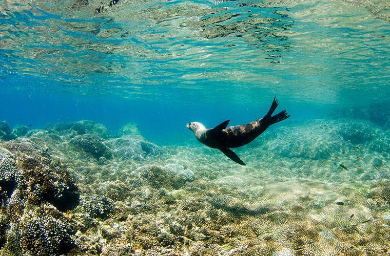 Cabo Pulmo Aventura de Snorkel