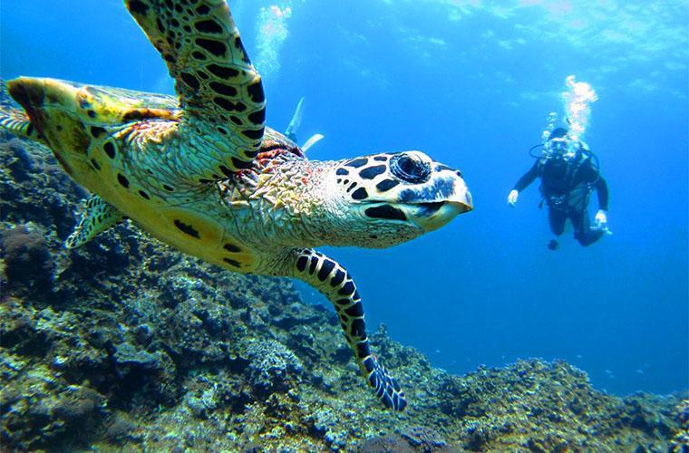 Scuba Diving Tour in Bayahibe