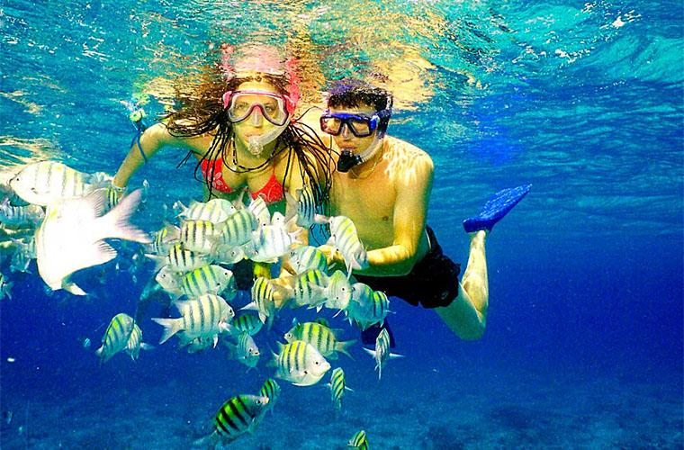Snorkel Tour in Catalina Island